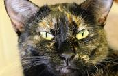 Polly the tortoiseshell cat became a MVP and found a home
