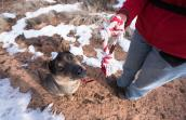 Pica disorder can't stop Ruger the dog from playing anymore