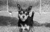 NKUT coalition terrier mix dog