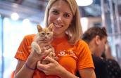 New York pet volunteer Kirstin Burdett with a kitten