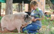 Molly the pig, who was depressed and heartbroken, and Marti