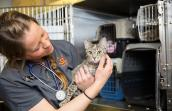 Woman holding a cat at the Best Friends Spay/Neuter Clinic in Ogden, Utah