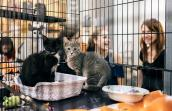 Kittens available for adoption at Urban Outfitters in New York