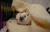 Rabbit in a blanket that was donated