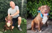 Patrick Stewart is fostering Ginger the pit bull terrier for Wags and Walks