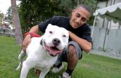 Martin Cortez making friends with Guero the pit bull dog at the Los Angeles Pet Super Adoption
