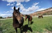 Lady, Thumper and Katie the horses