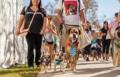 Strut Your Mutt in Los Angeles