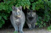 Feral cats in the bushes in Mayport, Florida