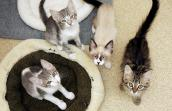 Litter of kittens ready for adoption that University of Florida students saved