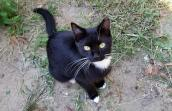 One of the many community cats helped by Larry Caulton and Best Friends through trap-neuter-return (TNR)
