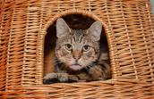 Chance the cat was thought to be feral, but in fact he turned out to be friendly, and was adopted