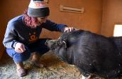 After losing his home where he was overfed, Wilbur the pig comes to Best Friends where he has reached a healthy weight
