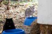 Caring for stray cats in winter is a priority of Best Friends in Salt Lake City, providing spay neuter, donated food and shelter