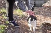 Person reaching down to pet a black and white community cat