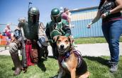 Tri-colored smiling dog with two Boba Fett costume characters during the May the 4th NKUT Super Adoption event