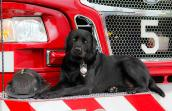 Smokey the firehouse dog posed on a fire truck next to a fireman's helmet
