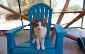 Zarra, the brown and white tabby, standing on a big plastic blue chair at Cat World