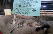 Keoni the tabby cat lying on a bed with a sign behind him