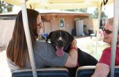 Sosa, a black and white Labrador mix, sitting between Jess and Jane in a golf cart