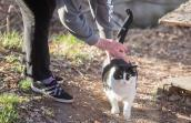 Person bending over to pet a black and white community cat who's walking by