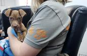 Person holding Monique the puppy in her lap wearing a Best Friends T-shirt