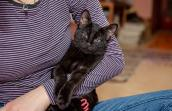 Black kitten with cerebellar hypoplasia being cradled in a person's arm