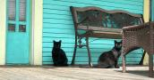 Two community cats sitting outside on a porch under a bench