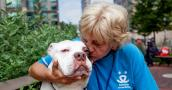 Best Friends in New York volunteer Kathy Posekel kissing a white pit bull dog