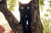 Bruce the black cat standing in a tree