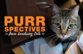 Svetlana the brown tabby cat next to the words, PURRspectives from Sanctuary cats