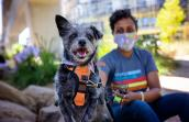 Smiling terrier type dog wearing a harness outside with a masked woman