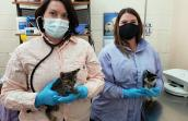 Two masked women holding kittens in a surgical room