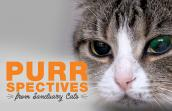 Ember the cat's face with the words, PURRspectives from Sanctuary Cats