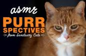 Arancia the cat's face with the words, Asmr purrspectives from Sanctuary cats