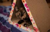 Everest the tortoiseshell cat lying in a triangle shaped cardboard scratcher