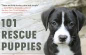Cropped version from the '101 Rescue Puppies' book cover