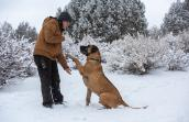 Knotts the dog lifting paw for a shake with a person, while outside in the snow