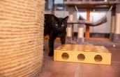 Kent the cat behind a sisal scratcher and wooden box toy full of holes