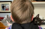 The back of Lucas' head while he holds to kittens behind him on his shoulders