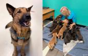 Collage of photos of Mama Fratelli the dog next to a person sitting on the floor surrounded by the huge litter of puppies