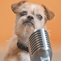 https://bestfriends.org/Scruffy%20brown%20terrier%20with%20a%20microphone%20in%20front%20of%20him