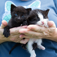 https://bestfriends.org/two%20kittens%20being%20held