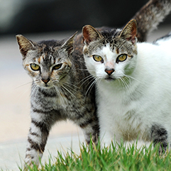 https://bestfriends.org/Seeing%20stray%20cats%3F