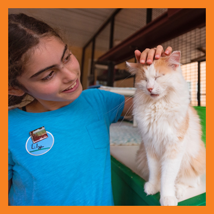 Young girl petting a white and orange cat