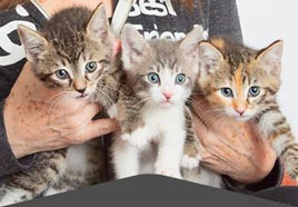 What is a no-kill community?