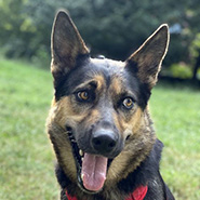 Adopt Xena the dog available for adoption from New York
