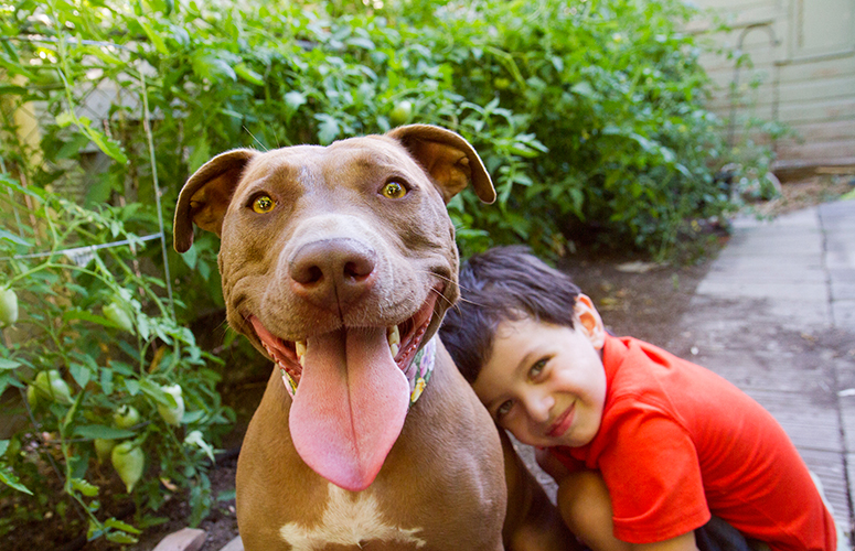 Little boy and pitbull