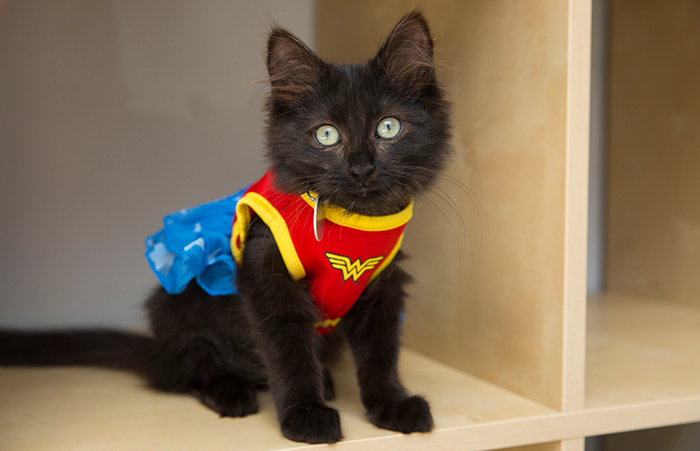 Cat dressed up as a superhero