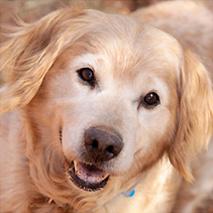 Best Friends - Los Angeles Pet Adoption Center (Mission Hills)